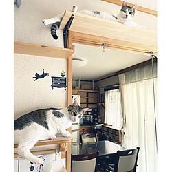 兄弟猫/夏/和室/キャットステップ/ねこと暮らす...などのインテリア実例 - 2020-07-26 10:24:23