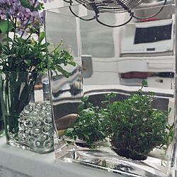 キッチン/ウォータープランツ/植物のある暮らし/NO GREEN NO LIFE/植物が好き...などのインテリア実例 - 2021-04-17 13:41:50