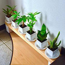 緑のある空間/観葉植物に癒やされてます✮/観葉植物のある暮らし/チャメドレア/ファイヤーボール...などのインテリア実例 - 2020-10-11 18:50:51