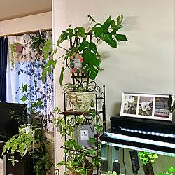 キッチンからの眺め°・*:.。.☆/観葉植物たち育ってます!/皆さんとの繋がりに感謝♪/みなさん!流石です(≧∇≦)/みなさんの優しさに感謝❤️...などのインテリア実例 - 2019-07-14 09:25:08