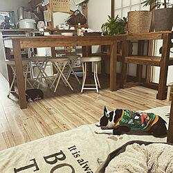 犬/古い家を好きになるDIY/築40年賃貸/観葉植物/DIY...などのインテリア実例 - 2020-11-11 23:39:21