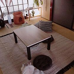 ニトリのラグ/和室/ネコと暮らす/パンパスグラス/猫...などのインテリア実例 - 2020-06-07 12:36:58