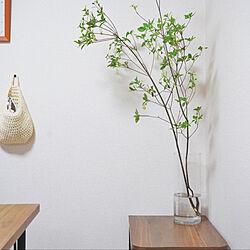 ドウダンツツジ/観葉植物/ニトリ/リビングのインテリア実例 - 2020-05-06 16:53:11