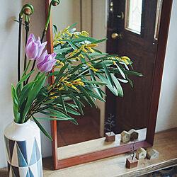 玄関/入り口/暮らしを変えたもの/暮らしを楽しむ/ディスプレイコーナー/植物のある暮らし...などのインテリア実例 - 2020-02-22 13:01:00