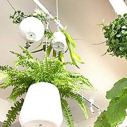 和モダン/ホワイトインテリア/マンションインテリア/グリーンのある暮らし/植物のある暮らし...などのインテリア実例 - 2021-04-17 12:50:43