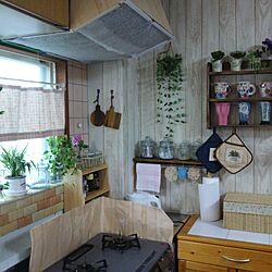 キッチン/模様替え/はんどめいど♪/オリズルラン/ダイソーのフェイクグリーンのインテリア実例 - 2016-09-06 06:22:39