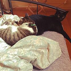 ミースケ兄ちゃんが僕の枕/のん、重い❗️/黒猫ミースケ/ねこのいる風景/白キジのん...などのインテリア実例 - 2021-07-22 23:56:47