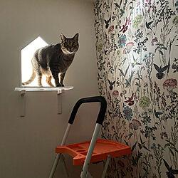 赤ちゃんと猫の共生/猫トイレ部屋/猫/ねこ/ねこ部...などのインテリア実例 - 2021-01-08 09:13:56