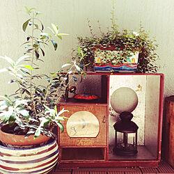 植木鉢/和家具/賃貸ベランダ/狭いベランダ/観葉植物のある暮らし...などのインテリア実例 - 2018-05-21 13:46:02