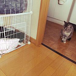 保護猫/黒猫/ありす&るな/るな/猫のいる暮らし...などのインテリア実例 - 2020-03-21 10:35:01