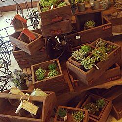 木箱/ガーデニングショップ/サボテン/フェイクグリーン/多肉植物...などのインテリア実例 - 2015-06-20 22:27:31