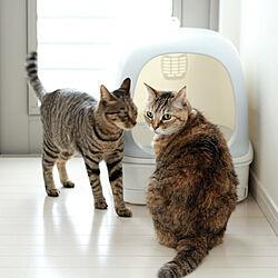 猫ちゃん想い/ニャンとも/ねこと暮らす。/ねこのいる日常/猫トイレ...などのインテリア実例 - 2020-11-22 17:52:36