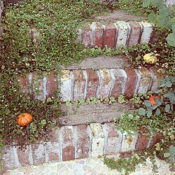 玄関/入り口/フロントガーデン/植物のインテリア実例 - 2013-10-25 00:34:58