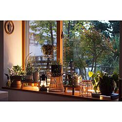 FEUERHAND/インテリアグリーン/ボタニカルライフ/NO GREEN NO LIFE/観葉植物のある暮らし...などのインテリア実例 - 2020-11-02 16:26:09
