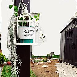 ダイソー/ダイソー鳥かご/ツルニチソウ/コストコ物置/庭DIYのインテリア実例 - 2021-06-21 19:58:30