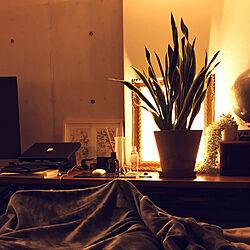 一人暮らし/観葉植物/照明/ベッド周りのインテリア実例 - 2020-01-23 23:36:36