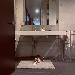 猫のいる生活/ねこと暮らす/ねこのいる風景/IKEA/バス/トイレのインテリア実例 - 2020-06-19 22:21:27