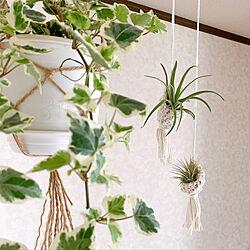 DIY/観葉植物/グリーン/100均/セリア...などのインテリア実例 - 2020-08-03 17:13:09