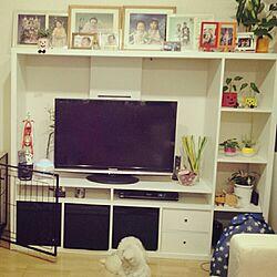 リビング/IKEAテレビ台/わんこと暮らす家/観葉植物のインテリア実例 - 2015-09-13 22:02:04