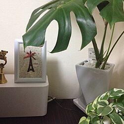 リビング/コード収納ボックス/モンステラ/グリーンインテリア/ポストカード♡...などのインテリア実例 - 2016-05-27 22:02:27