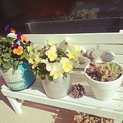 玄関/入り口/植物/多肉植物のインテリア実例 - 2015-03-04 14:35:25
