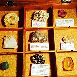 棚/鉱石/化石のインテリア実例 - 2014-04-02 23:07:37