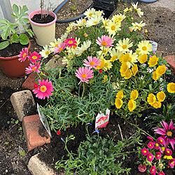 建売住宅/花壇の寄せ植え/花壇ブロック/花壇の花/花壇DIY...などのインテリア実例 - 2020-04-29 23:13:15