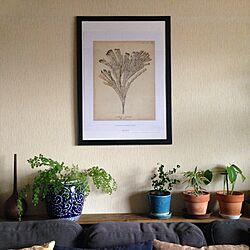 壁/天井/ポスター/IKEA/植物/グリーン...などのインテリア実例 - 2016-01-23 10:07:27