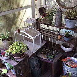 棚/植物/セリア/100均/リメイク...などのインテリア実例 - 2015-04-20 12:03:17