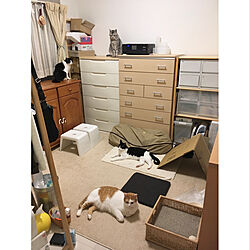 ねこのいる日常/防災対策/猫と暮らす/ちょび/震災に備える...などのインテリア実例 - 2020-05-30 08:01:45