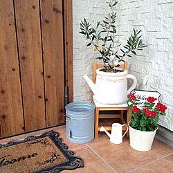 玄関/入り口/玄関マット汚いです…/LIXIL/お花/オリーブの鉢...などのインテリア実例 - 2016-08-29 17:30:35