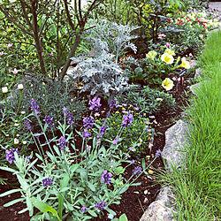 芝生の庭/庭/ガーデニング/芝生/ラベンダー...などのインテリア実例 - 2020-06-14 09:41:30