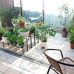 玄関/入り口/タイルテラス/植物が好き/庭の花/ガーデニング...などのインテリア実例 - 2021-07-24 08:49:31