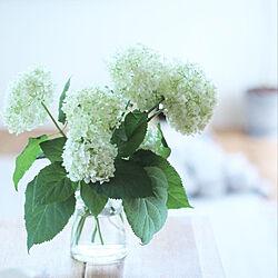 花のある暮らし/花瓶/アナベル/ナチュラル/机のインテリア実例 - 2019-06-01 14:13:25