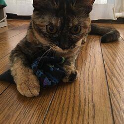 リビング/ミリン₍˄·͈༝·͈˄₎ฅ˒˒/インテリアしゃなくてごめんなさい。/猫と子供と暮らすのインテリア実例 - 2017-06-21 08:45:27