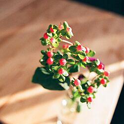 リビング/NO GREEN NO LIFE/観葉植物/植物/雑貨...などのインテリア実例 - 2016-11-21 15:51:46