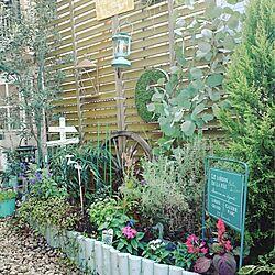 庭/手作り花壇/ガーデニング/強い植物が好き/ケイトウ...などのインテリア実例 - 2015-09-29 10:09:27