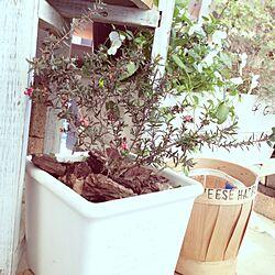 壁/天井/ai's small garden/からの眺め/ベランダガーデニング/御柳梅のインテリア実例 - 2012-12-21 08:35:14