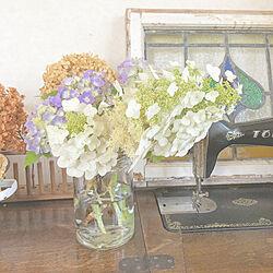 ステンドグラス/ミシン/柏葉紫陽花/紫陽花/お庭の花...などのインテリア実例 - 2020-06-07 09:27:02