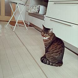 キッチン/ねこ/ねこと暮らす。/老猫/猫と暮らす...などのインテリア実例 - 2019-01-03 09:53:55