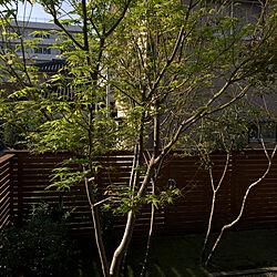 庭/芝生の庭/南側/玄関/入り口のインテリア実例 - 2020-10-14 08:16:44