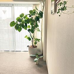 カーペットの家/シンボルツリー/観葉植物/植物のある暮らし/ウンベラータ...などのインテリア実例 - 2021-05-10 08:31:43