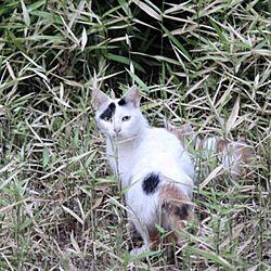玄関/入り口/HB庭/野良猫/お庭/ブログ更新しましたのインテリア実例 - 2014-06-06 21:48:41
