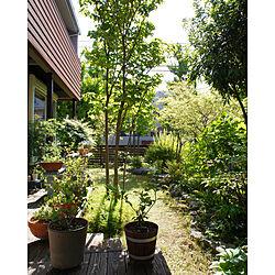 心地よい暮らし/植物のある暮らし/新緑の季節/4月の庭/季節を楽しむ暮らし...などのインテリア実例 - 2021-04-20 20:48:04