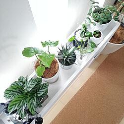 棚/グリーンのある暮らし/観葉植物/DIY/プラントボックス...などのインテリア実例 - 2020-10-30 15:30:47