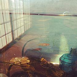 壁/天井/アンティーク/かぐや姫美奈代/雑貨/イングリッシュガーデン...などのインテリア実例 - 2019-09-10 12:51:57