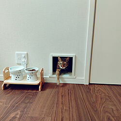 リビング/猫/ねこのいる日常/ねこと暮らす/リビング階段...などのインテリア実例 - 2021-09-27 12:35:12