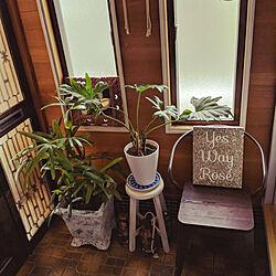 玄関/入り口/古い家に暮らす/家で楽しむ暮らし/植物のある暮らしのインテリア実例 - 2020-05-31 11:23:16