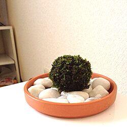 植物/苔玉のインテリア実例 - 2013-03-09 20:21:44