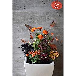 花の名前は分かりません/インテリア/難しい/寄せ植え/ディスプレイ...などのインテリア実例 - 2019-10-27 21:18:58